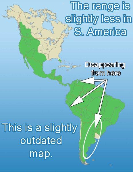 Puma range map