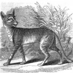 egyptian-cat-1849-1