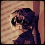 mummified-cat-Dario-ipofisi