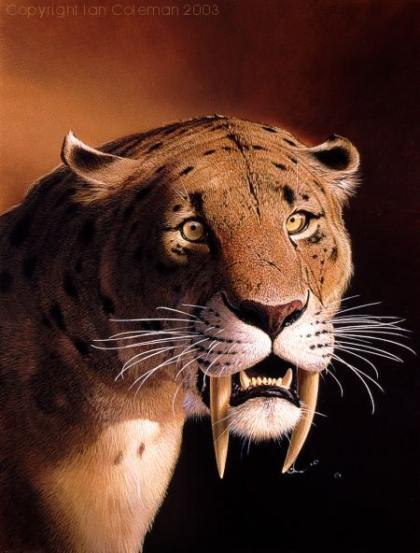 Facts of Sabertooth Tiger http://pictures-of-cats.org/cat-history-pictures.html