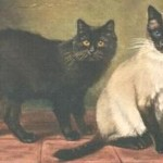 Siamese cat and Manx cat 1903