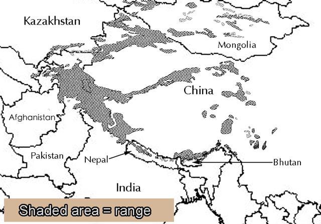 Snow Leopard Range