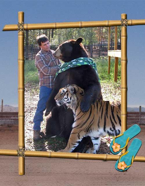 bear-tiger-and-man