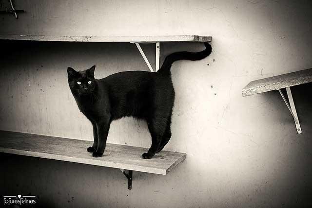 rescue cat brazil