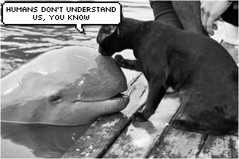 cat and dolphin talk