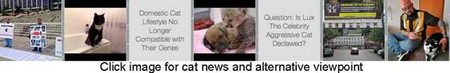cat-news-on-blog