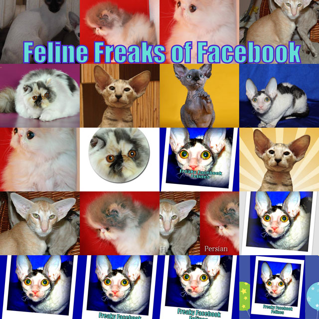 feline-freaks-of-facebook