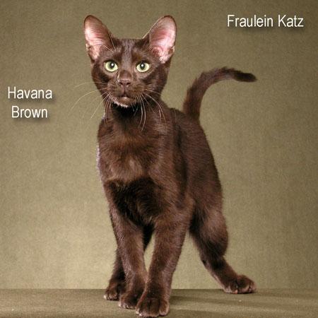 havana-brown