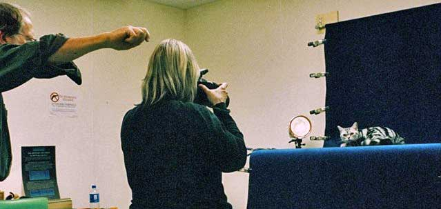 Helmi Flick photographing a silver classic tabby American Shorthair at a cat show in Oklahoma