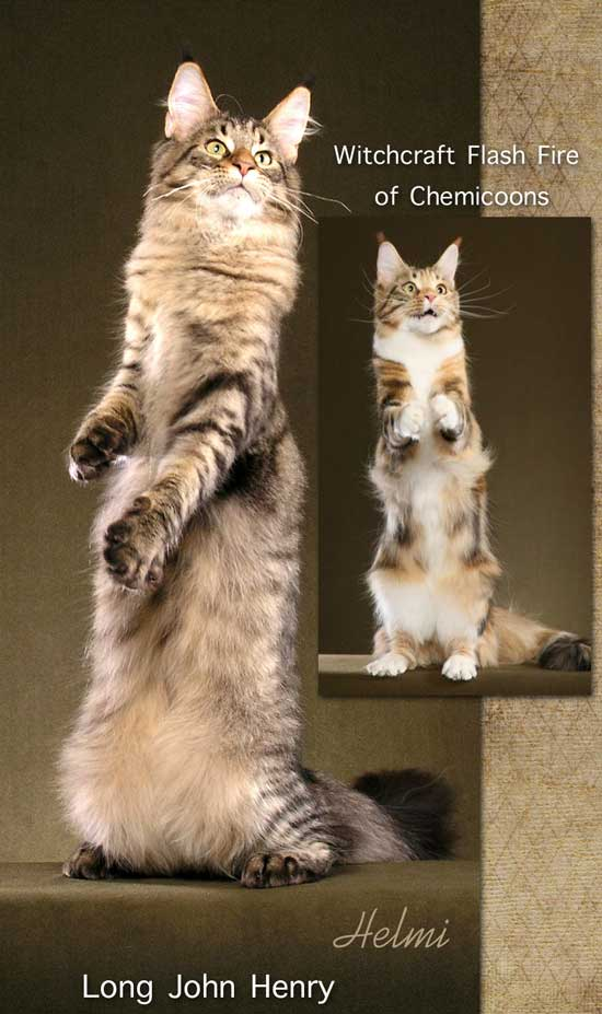essay on declawing cats