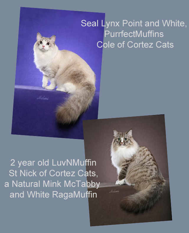 RagaMuffin Cats