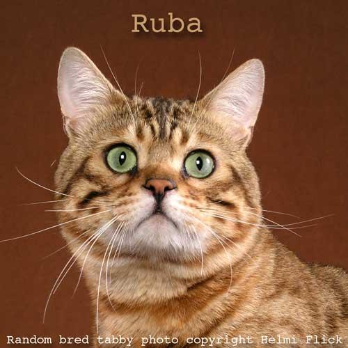 Ruba tabby cat
