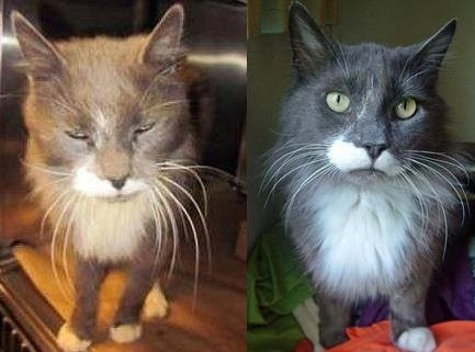Tom at shelter then after living with us