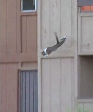 cat jumping from burnging building to save his life