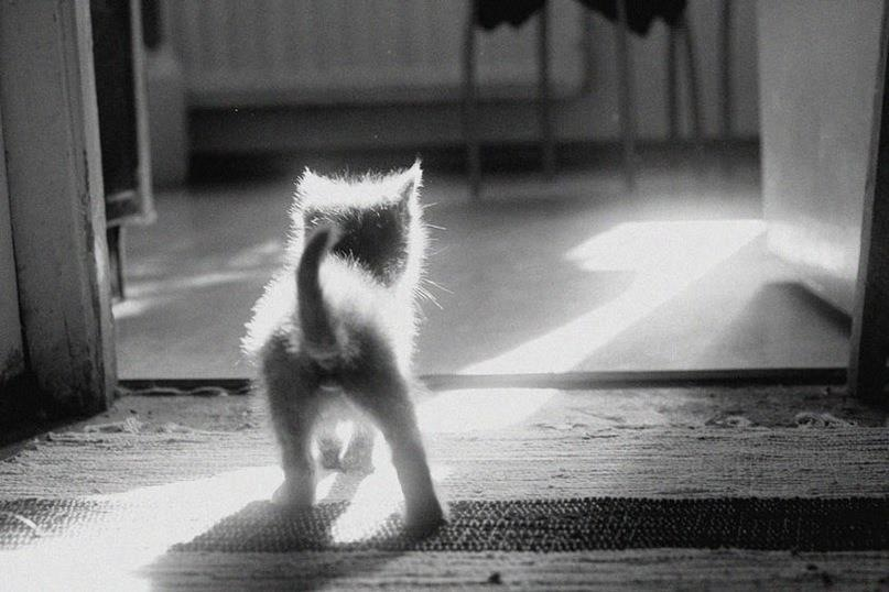 Kitten walking into the light