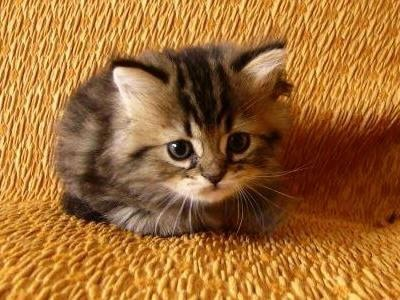 Concerned Kitten