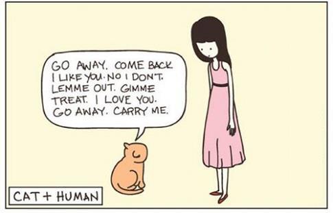 A demanding  cat