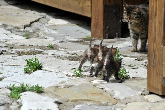 Kittens and Mother Cat