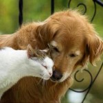 Old Friends - Cat Loves Dog