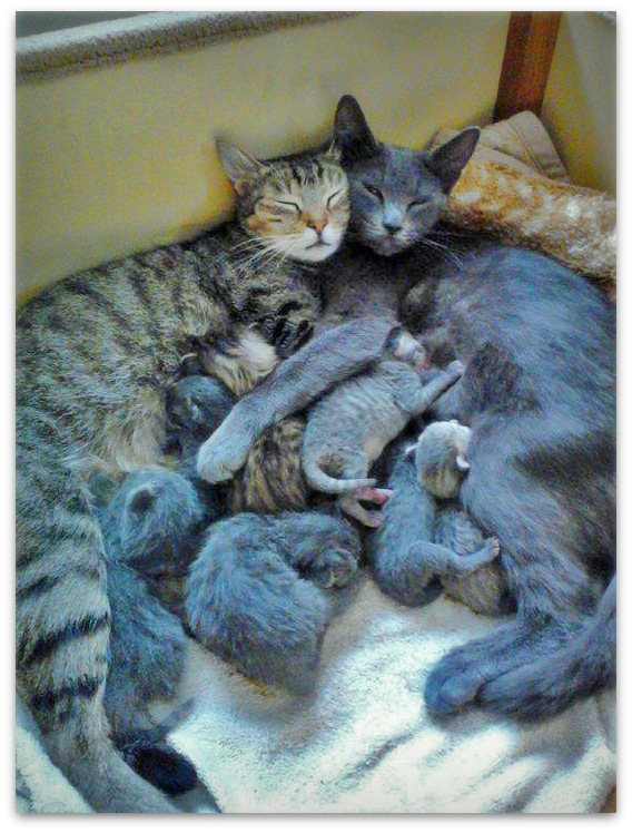 mother and father cat with kittens