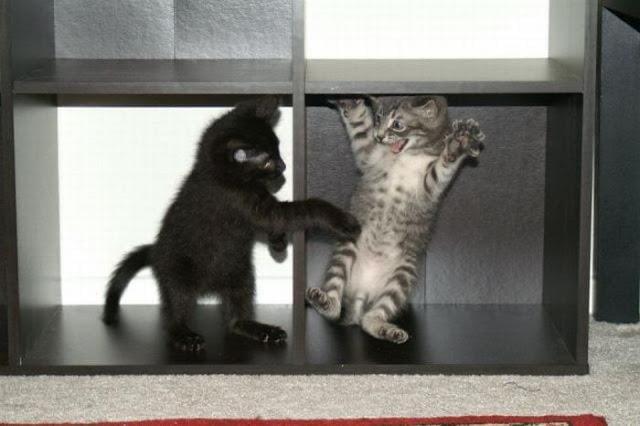Startled Kitten