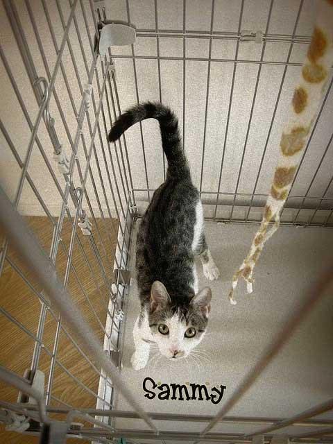 Sammy a rescue cat