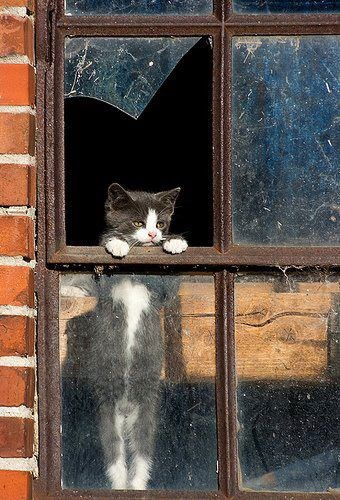 cat at broken window