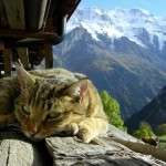 Cat on Mountain Top