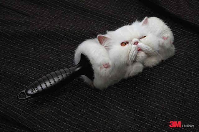 Lint Roller Cat