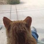 feral cat turned semi-domestic