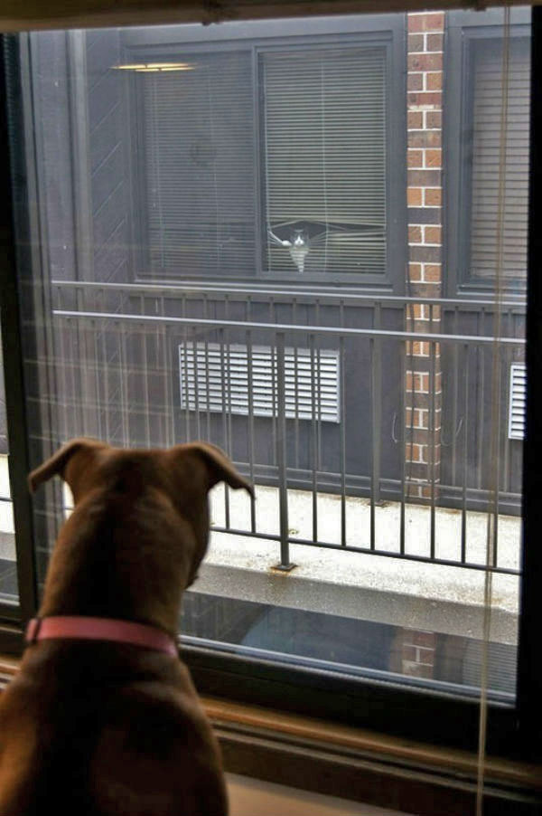 Rear Window Cat Meets Dog