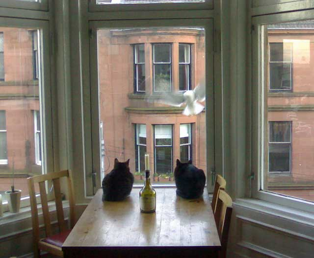 Seagull trying to attack two cats