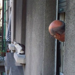 Cat and Man at Windows