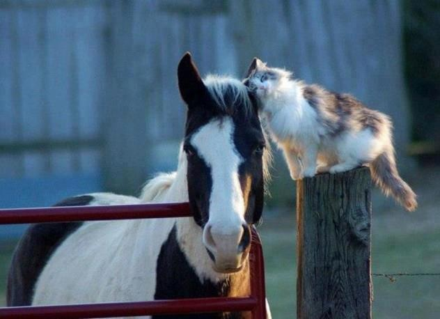 Cat Head Butts a Horse Companion