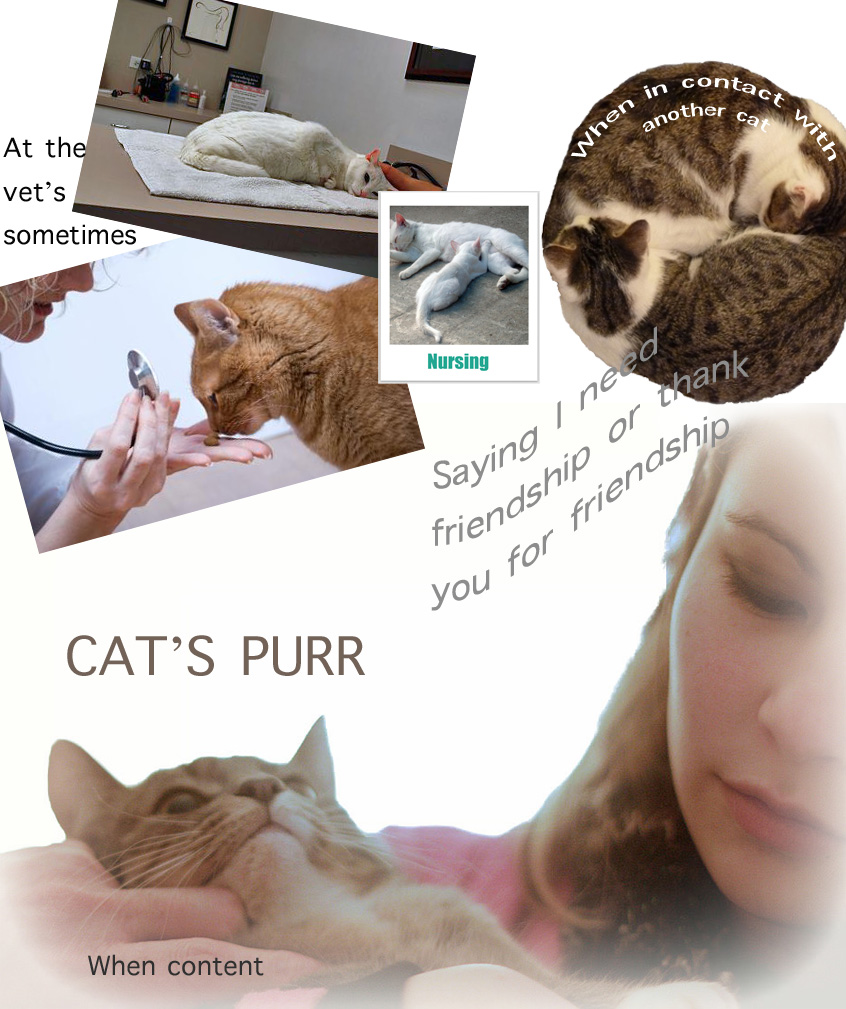 Cat Purr Facts For Kids