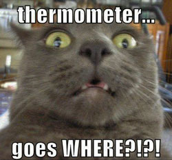 Measuring a Cat's Temperature