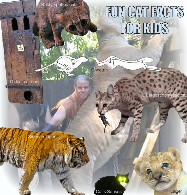 Fun Cat Facts For Kids