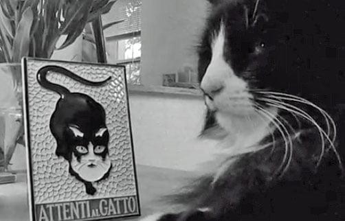 Henri the famous philosophical cat