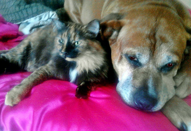 Cat Living With Large dog