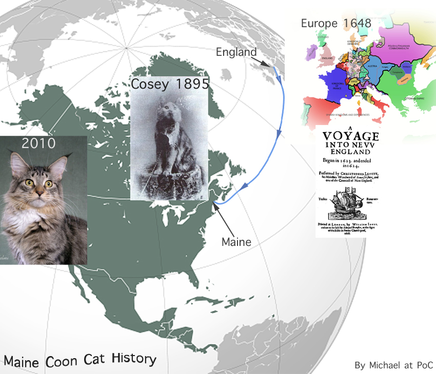 Maine Coon Cat Facts for Kids