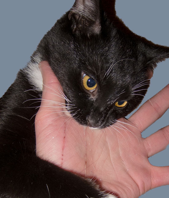 Stopping a cat biting you