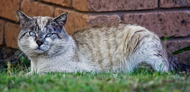 Stray Cat Australia