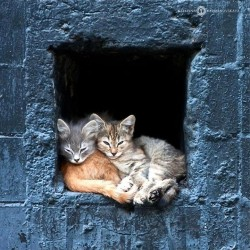 Three Cats at a Window