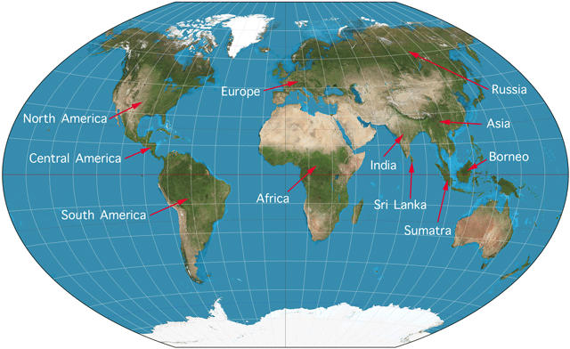 World Map for wild cat species for kids
