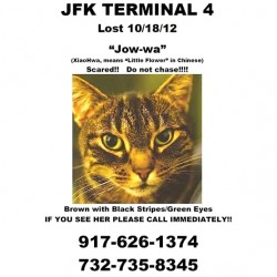 Flyer for cat