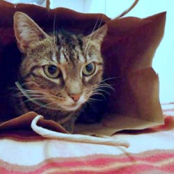 Missing-cat1