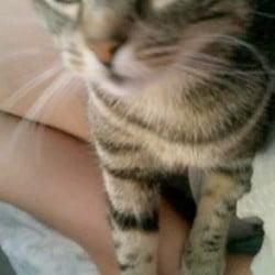 Missing cat2