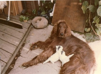 Mitt Romney's dog Seamus