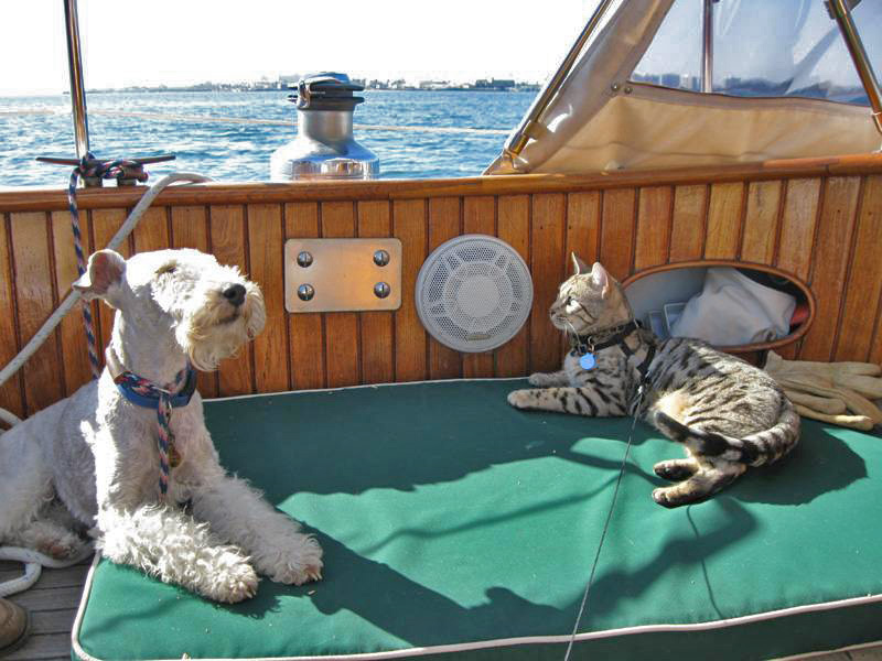 Bengal Cat At Sea