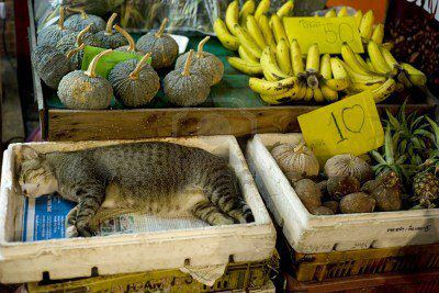 Cat At Green Grocers